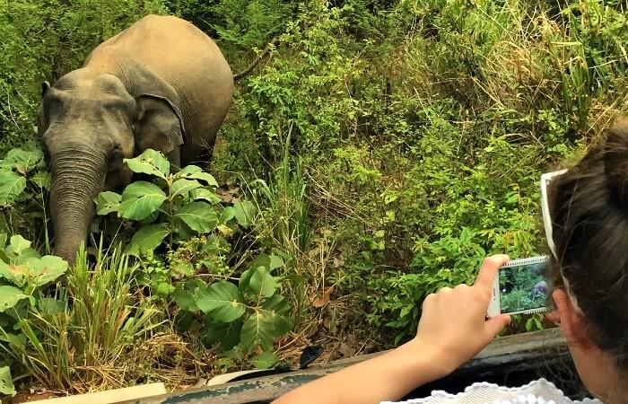 Places to visit in Sri Lanka - spotting elephant on safari