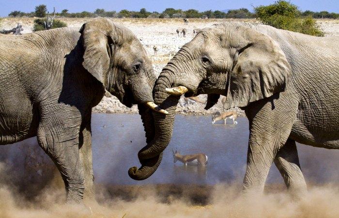Elephant at Etosha waterhole - Namibia family holiday