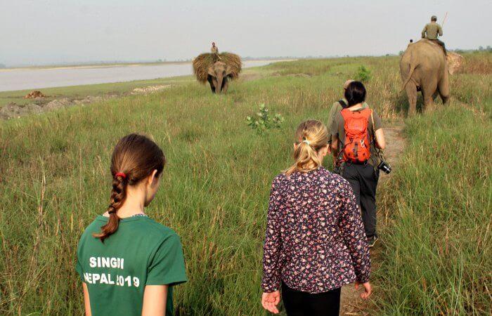Early morning safari walk with elephants