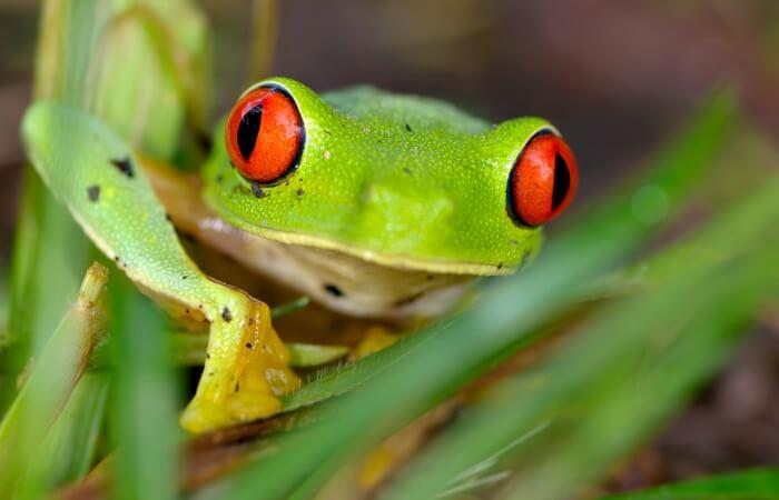 Tree frog - Belize customer reviews
