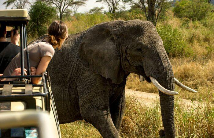 Elephant in Serengeti - family safari trip