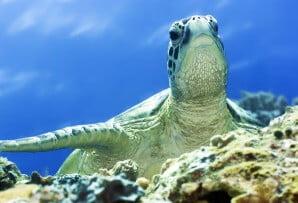 Green Turtle Borneo itineraries
