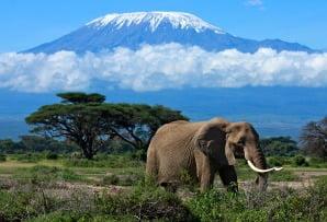 Kenya itineraries - Amboseli National Park with elephant