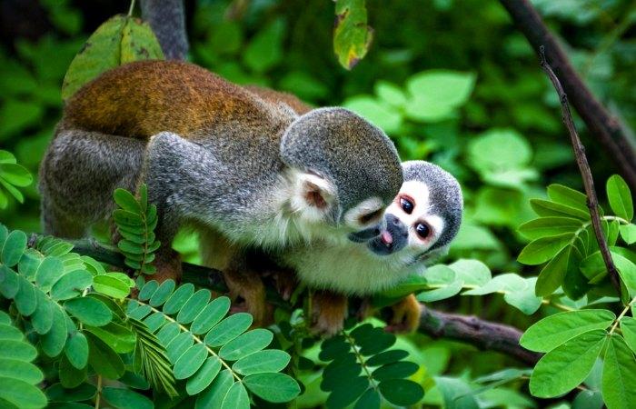 Spot many types of monkey on an Ecuador family holiday
