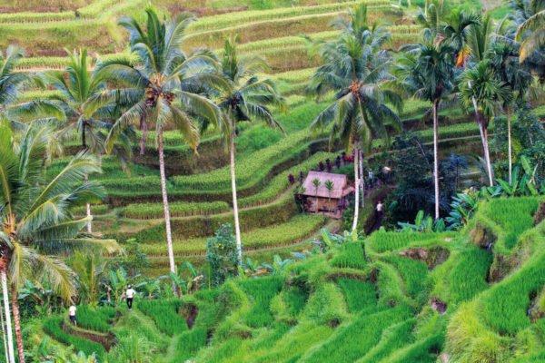 Indonesia & Bali