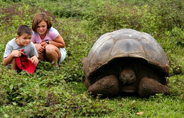 Places to visit in Ecuador - giant tortoise