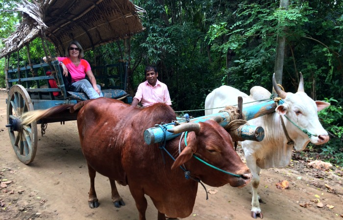 Sri Lanka family travel - village visit by ox cart