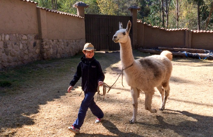 Peru with kids - young visitor taking a llama for a walk