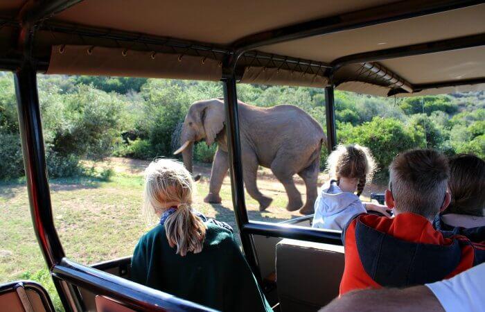 On safari at Amakala, photos of South Africa for families blog