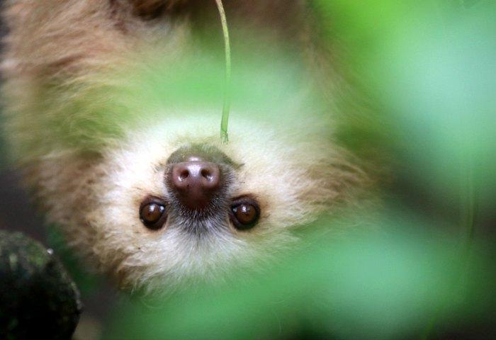 Young photographer awards - sloth