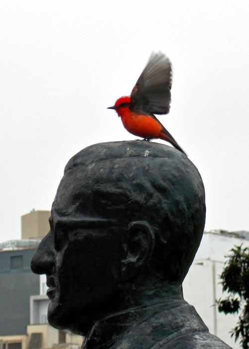 Yping photographers award - bird on statue