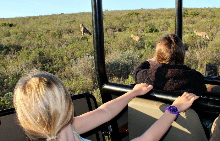 kids spotting cheetahs - safari diary