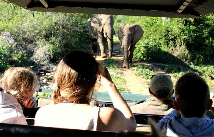 elephants approaching safari vehicle - safari diary