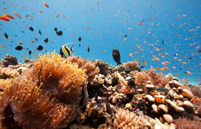 Corals and fish in Zanzibar