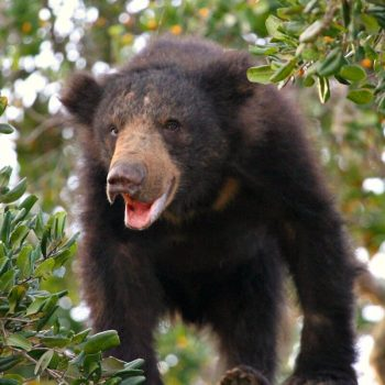 Wildlife experiences in Sri Lanka - spotting brown bear
