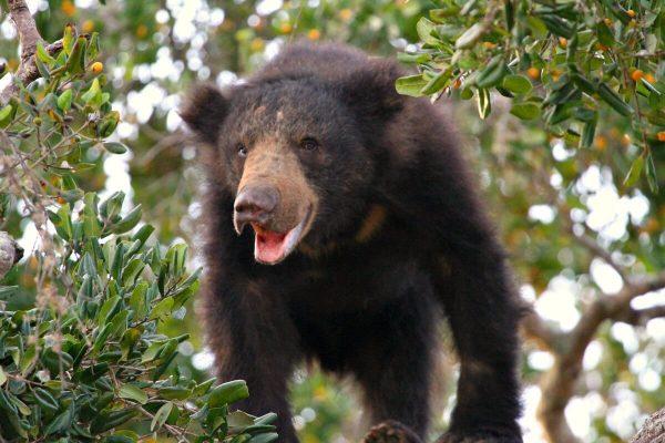 Wildlife experiences in Sri Lanka - spotting brown bear