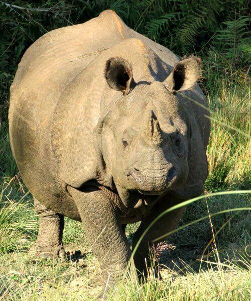 Rhino at Chitwan - Nepal photo diary
