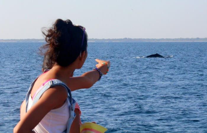 Whale watching Mirissa - family wildlife experiences in Sri Lanka