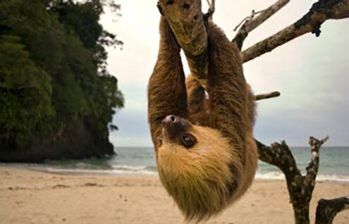 Best for School Holidays calendar - Costa Rica