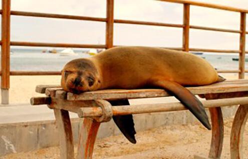 Best for School Holidays calendar - Galapagos