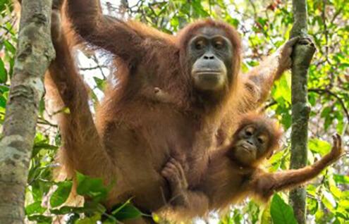 Best for School Holidays calendar - Borneo