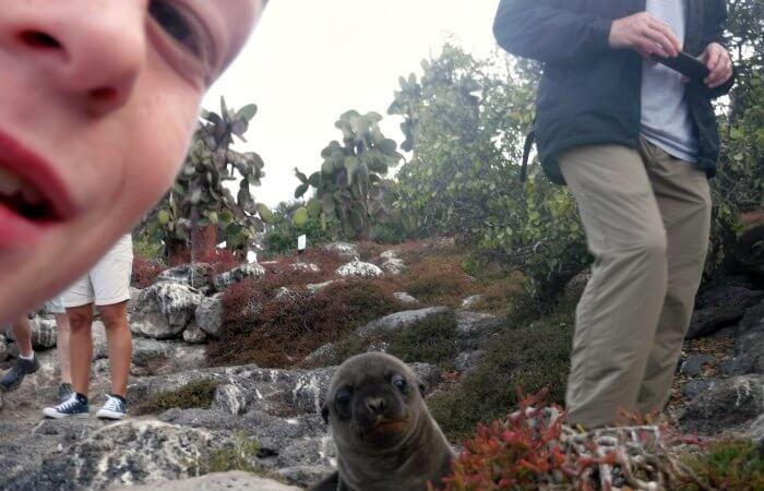Baby sea lion on trail - Galapagos Island cruise