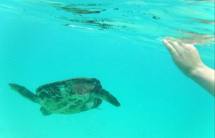 swimming with turtles -Underwater photo taken on Galapagos Islands cruise