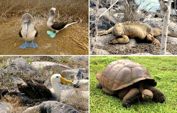 Galapagos with kids - Helene's wildlife snaps