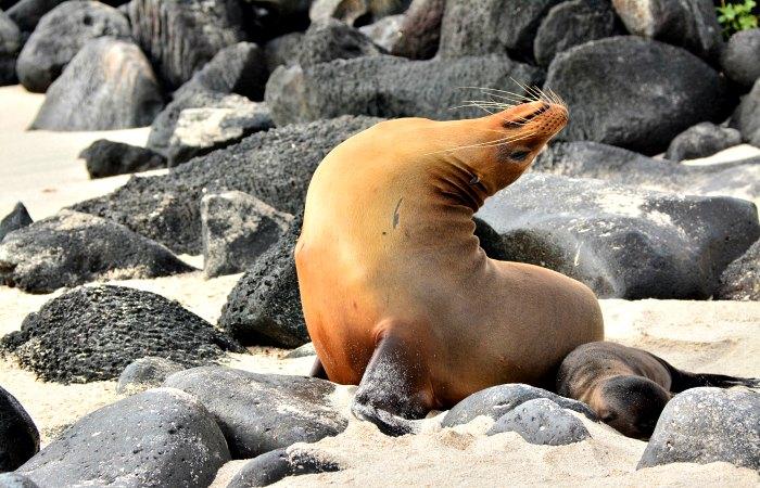 Galapagos family trip - a seal lion sun bathing