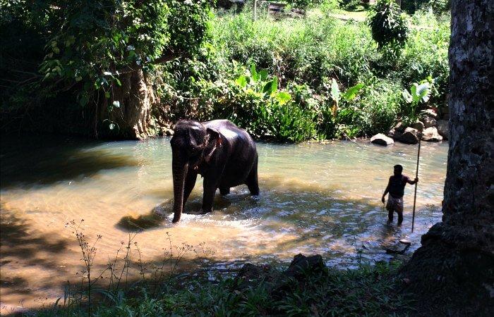 Elephant at MEF - 50th birthday celebration