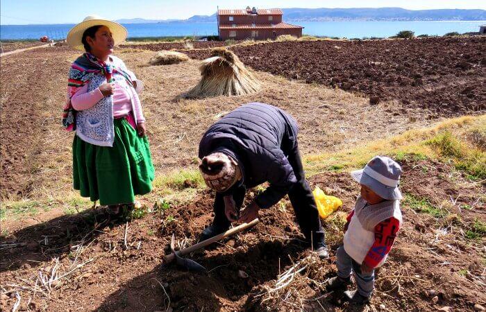 Family farming near Lake Titicaca - Touring Peru itinerary