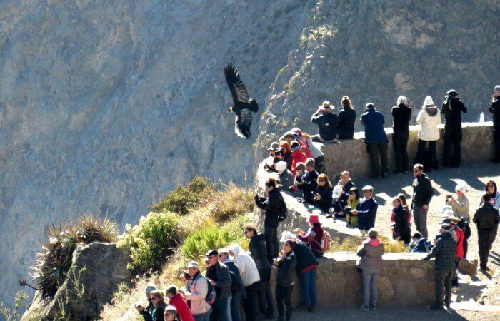 Condors at the Colca Canyon - Touring Peru holiday