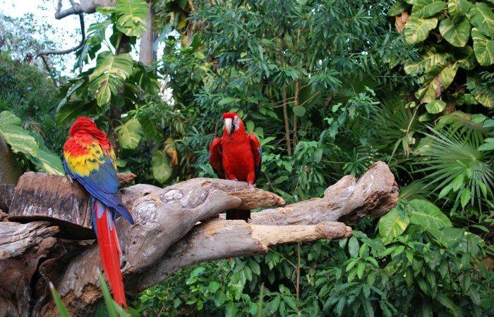 Brightly coloured macaw - Amazon - Touring Peru holiday