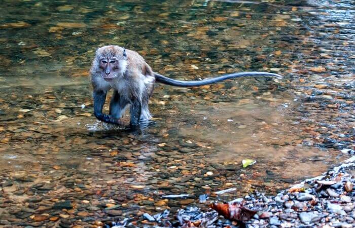 Khao Sok Nation Park - monkey at edge of lake