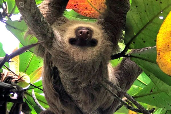 Sloth Costa Rica - Travel trends 2019
