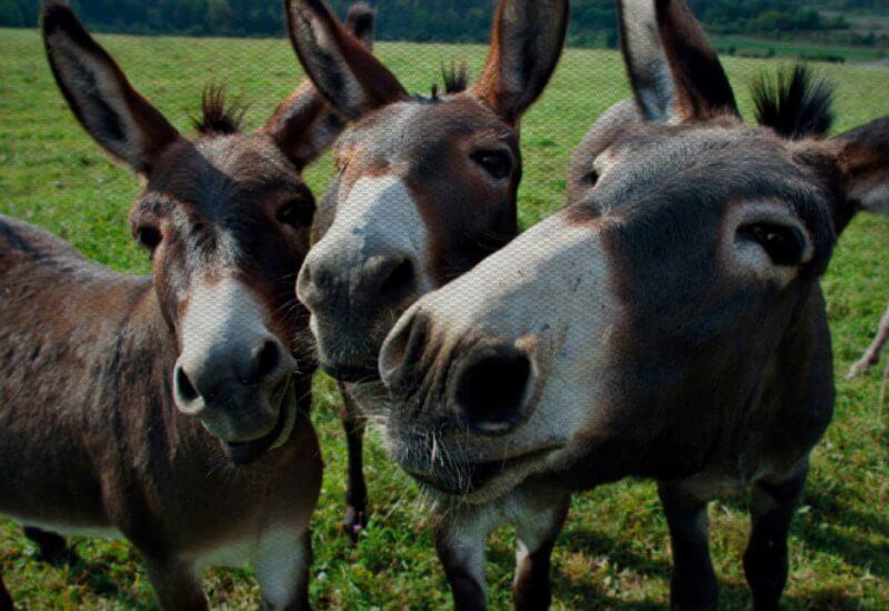 Stubborn Mule Travel - team - place holder