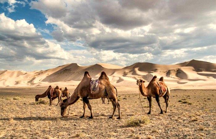 Khongoryn Els - Mongolia itineraries