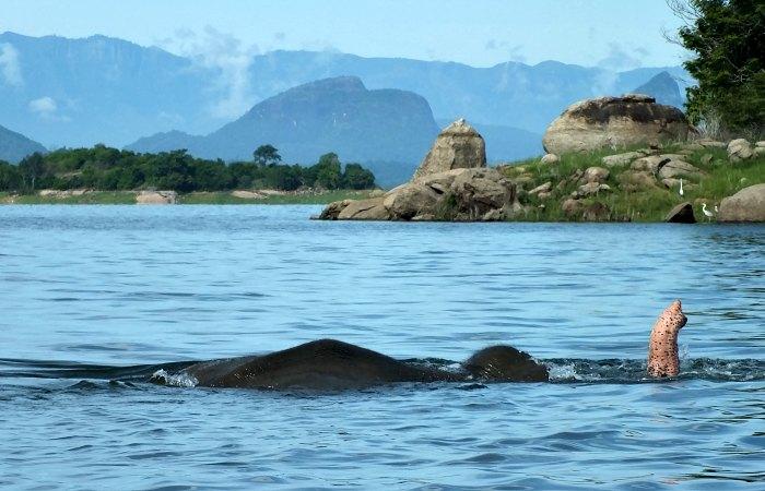 Elephant swimming in lake - Sri Lanka - luxury family holiday