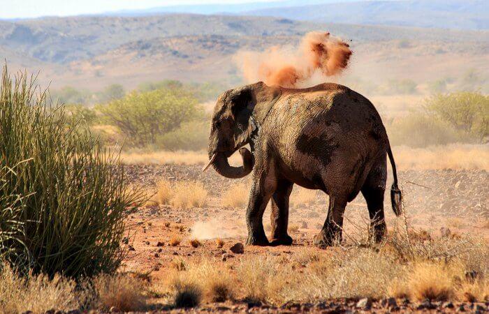 Damaraland elephant taking a dust bath - Namibia - family wildlife holiday
