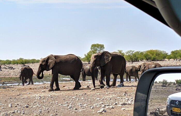 Elephants at Etosha waterhole