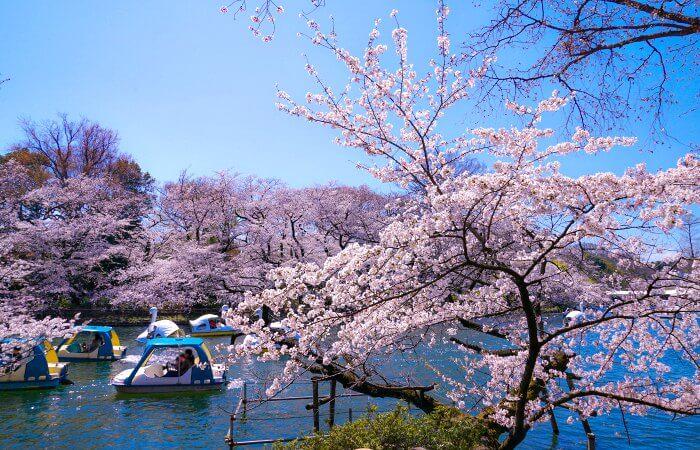 Inokashira Park with boating lake - Tokyo with children itinerary