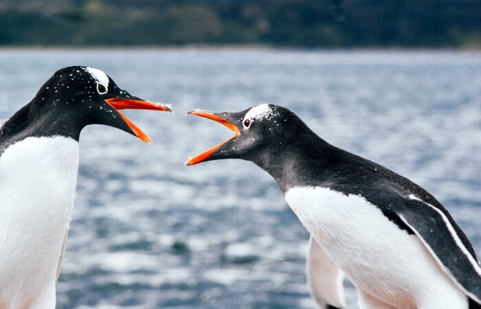 See penguins in Tierra Del Fuego on a Patagonia with kids holiday