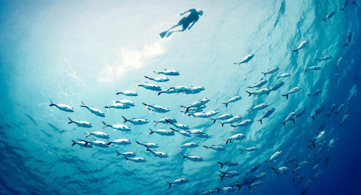 Snorkelling reef fish - Caribbean sea