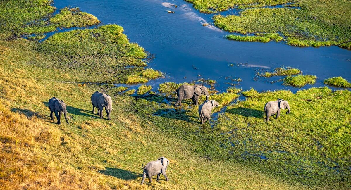 Aerial photo of elephants in the Okavango Delta