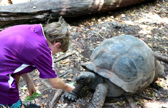 Feeding a Giant Tortoise on a family Zanzibar trip with children