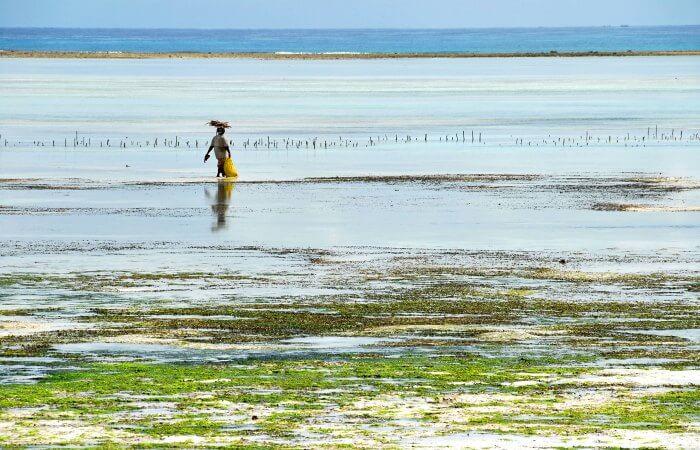 Farming seaweed in Zanzibar - try your hand on a Zanzibar with kids holiday