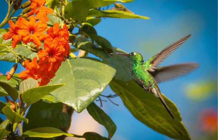 Cuban Emerald Hummingbird - Zapata Peninsula - Cuba with kids recommendation